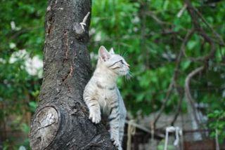 Cat_tree
